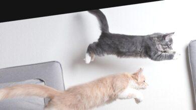 Photo of Тест: Выберите фразу о кошках и узнайте своё истинное «я»