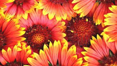 Photo of Тест: 21 июня отмечается Международный день цветка. Кто и когда придумал этот праздник — неизвестно, но это нисколько не делает его хуже